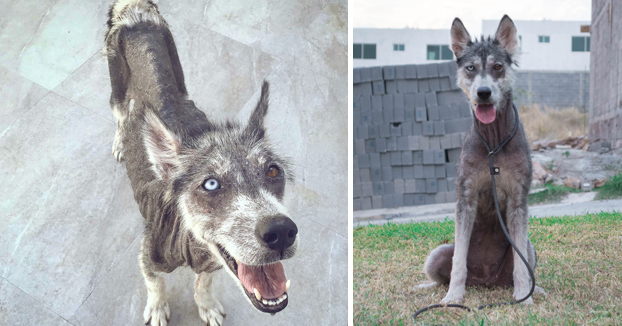 El increíble cambio físico de una perra callejera tras ser rescatada