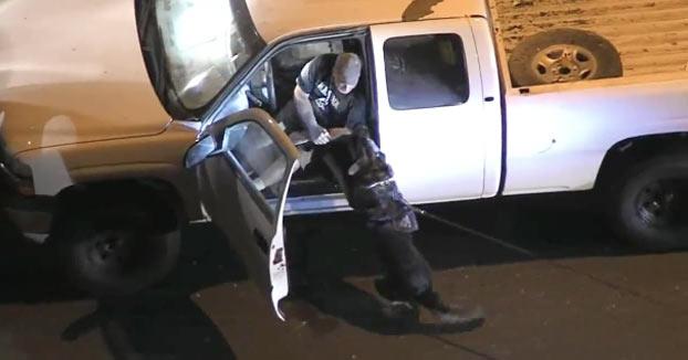El perro policía se lanza a por el sospechoso, le muerde el brazo y aún así se resiste a salir del coche