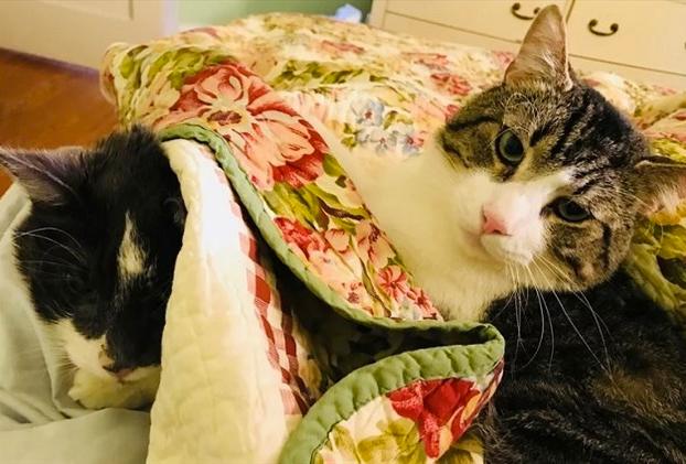 Se gasta 15.300 euros en un trasplante de riñón para su gato de 17 años