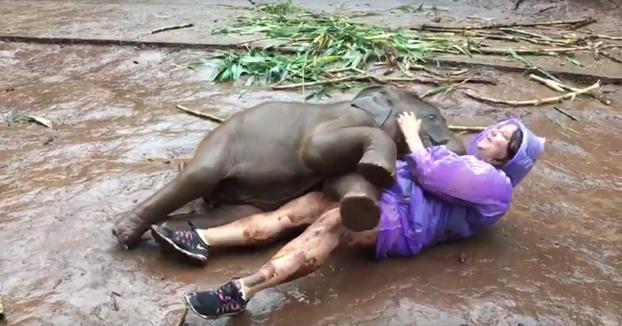 Abrazos de amor de un bebé elefante en el barro
