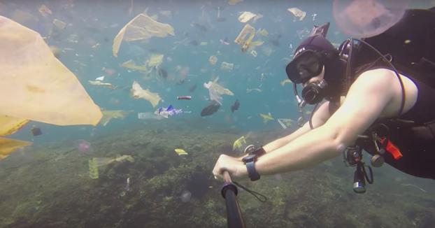 No, no son medusas, es basura