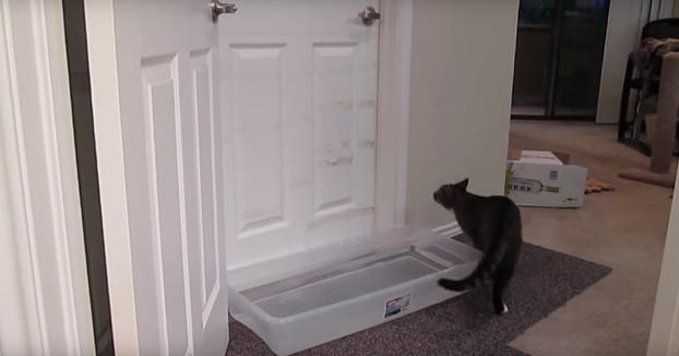 Le pone una trampa a su gato al descubrir que sabe abrir puertas