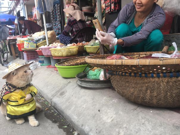 El pescadero más adorable de Vietnam