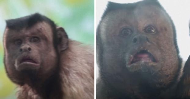 El mono con cara de humano