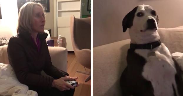 La reacción del perro al ver a la madre jugando al Call of Duty