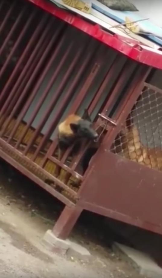 El perro más astuto del lugar que se escapó de su propia jaula
