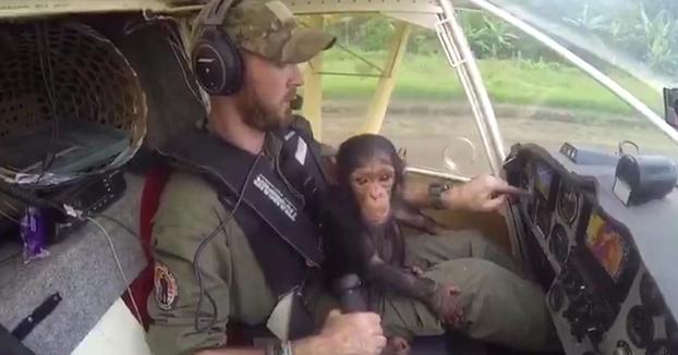 El tierno rescate de Mussa, una cría de chimpancé huérfana