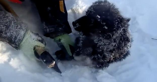 Salvan a este cachorro de morir congelado en la nieve