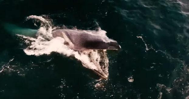 Increíbles imágenes de dos ballenas alimentándose en la costa del Garraf, Barcelona