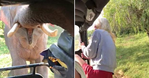 Un elefante ataca el Jeep de unos turistas en un safari en Sri Lanka