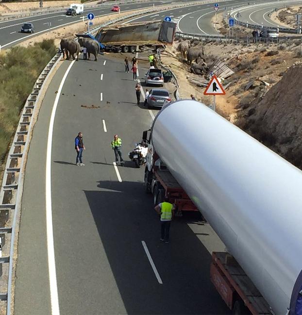 Un camión que transportaba elefantes de circo vuelca en la autopista A-30 en Albacete