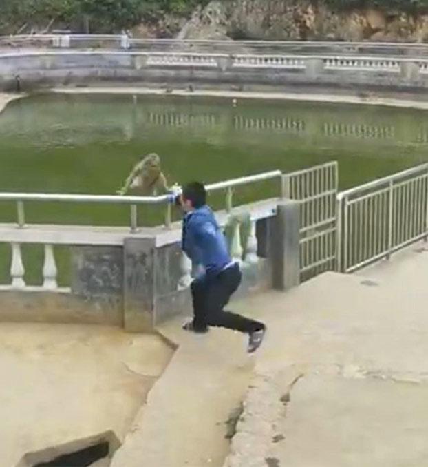 Empuja a un mono para tirarlo al agua y el karma le llega de forma instantánea