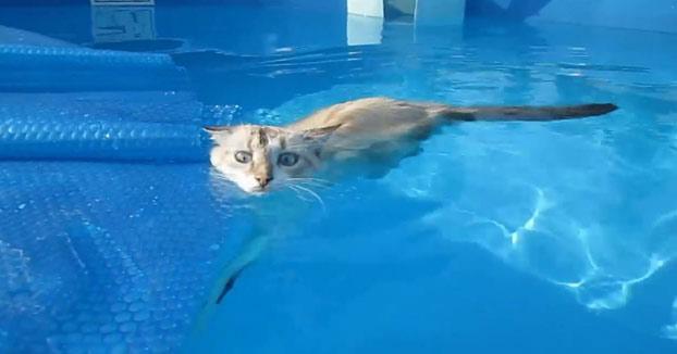 ¿Que a los gatos no les gusta el agua? A este le encanta