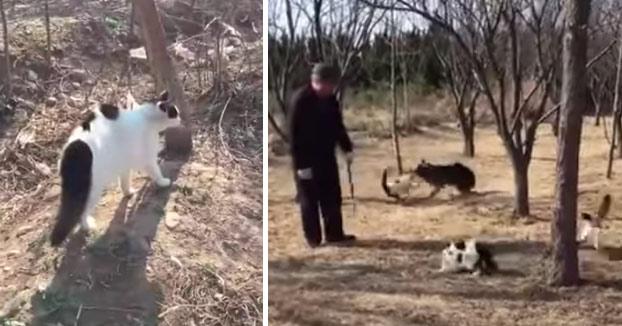 Este grupo de 8 gatos se junta para atacar a un perro