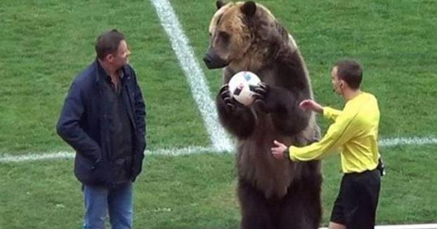 Un oso hace el saque de honor en un partido de fútbol en Rusia