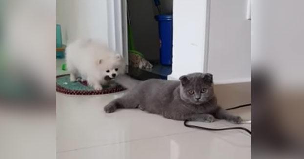 Este gato se ha quedado sin escapatoria al verse agarrado por el perro