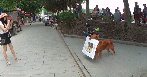 El perro que anunciaba una hamburguesería