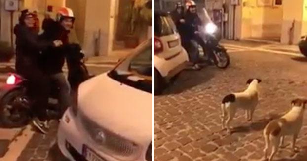 Estos dos perros no tienen ninguna intención de dejar salir a la moto. Veamos cómo se las apañan...