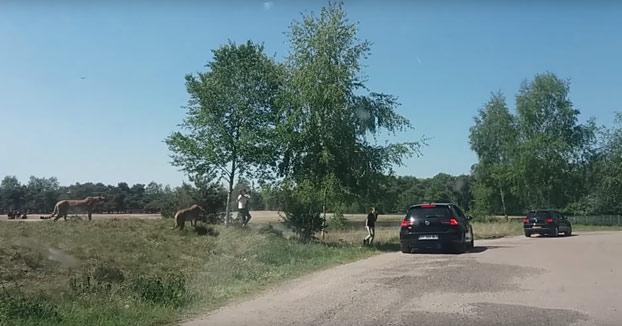 Una familia sale del coche durante un safari y acaba rodeada de guepardos