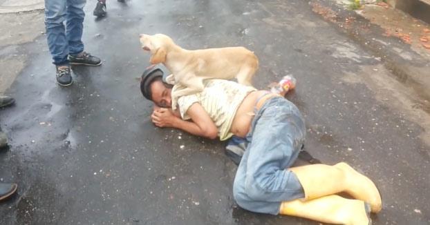 Un perro protege a su dueño borracho mientras está tirado en la calle