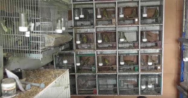 Un youtuber compra una finca a un cazador con 74 pájaros para liberarlos [Vídeo]