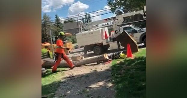 Le cae un árbol en la cabeza justo cuando su compañero lo acababa de talar