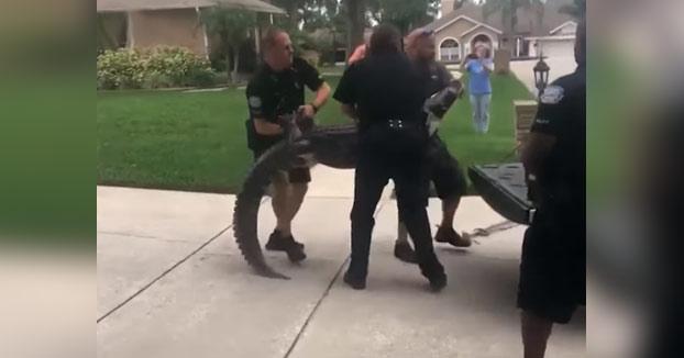 Un cocodrilo es peligroso aunque esté amordazado y bien atado