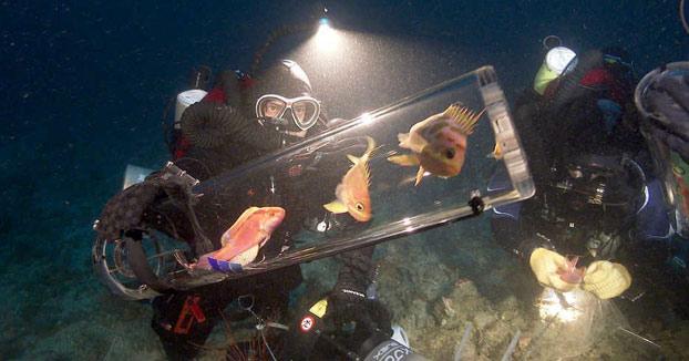 Cómo subir peces vivos de las profundidades sin que 'exploten'