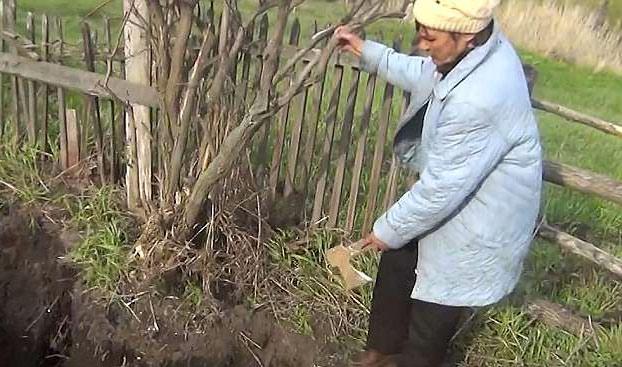 Encuentra en su jardín el cráneo del primer marido de su esposa