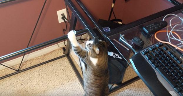 Mi gata totalmente confundida cuando quité el cristal del escritorio
