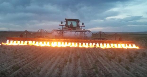 Deshaciéndose de las malas hierbas con un lanzallamas montado en un mecanismo de tractor