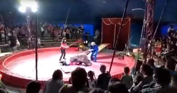 Un oso ataca a uno de los empleados de un circo en Rusia