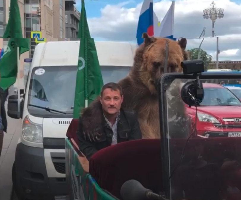 Lamentable espectáculo: Un oso obligado a tocar una vuvuzela encima de un coche por el centro de Moscú