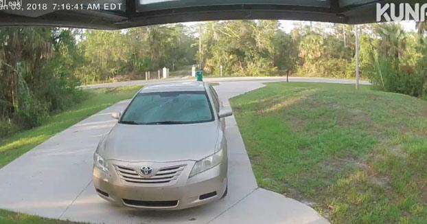 Un puma caza a un gato en el porche de una casa en Florida