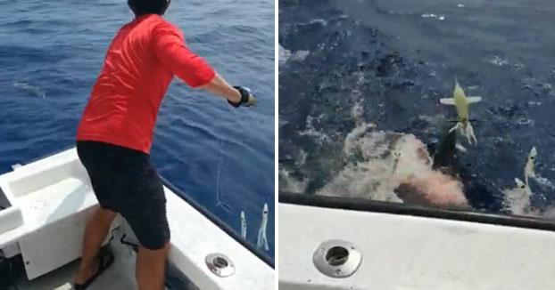 Un tiburón se come medio atún recién pescado justo cuando lo iban a subir al barco