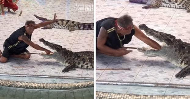 Un cocodrilo muerde el brazo de su domador en pleno espectáculo