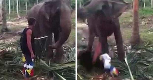 Un elefante tumba a un turista de un trompazo cuando intentaba tocarlo
