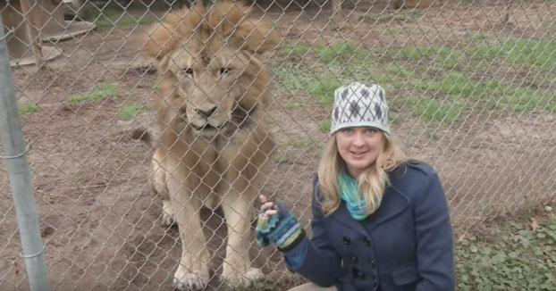 Me gustaría conocer a la persona que pensó que era buena idea hacerle una entrevista a un león