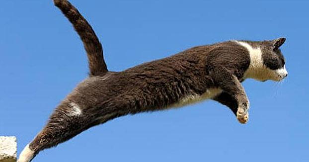 Un zaragozano de 53 años, detenido por empeñarse en hacer volar a su gato