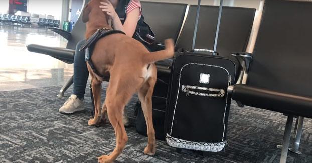 Un perro adiestrado para detectar los ataques de ansiedad de su dueña
