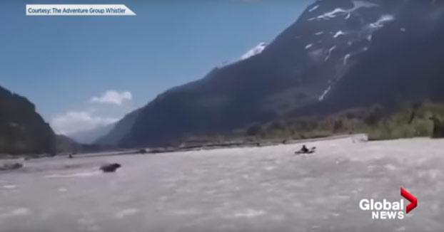 Un oso pardo intenta cazar a un hombre en un kayak en Canadá