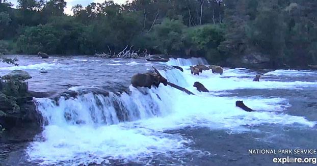 Cámara en directo: Osos pardos en las cascadas del río Brooks en el Parque Nacional Katmai, Alaska