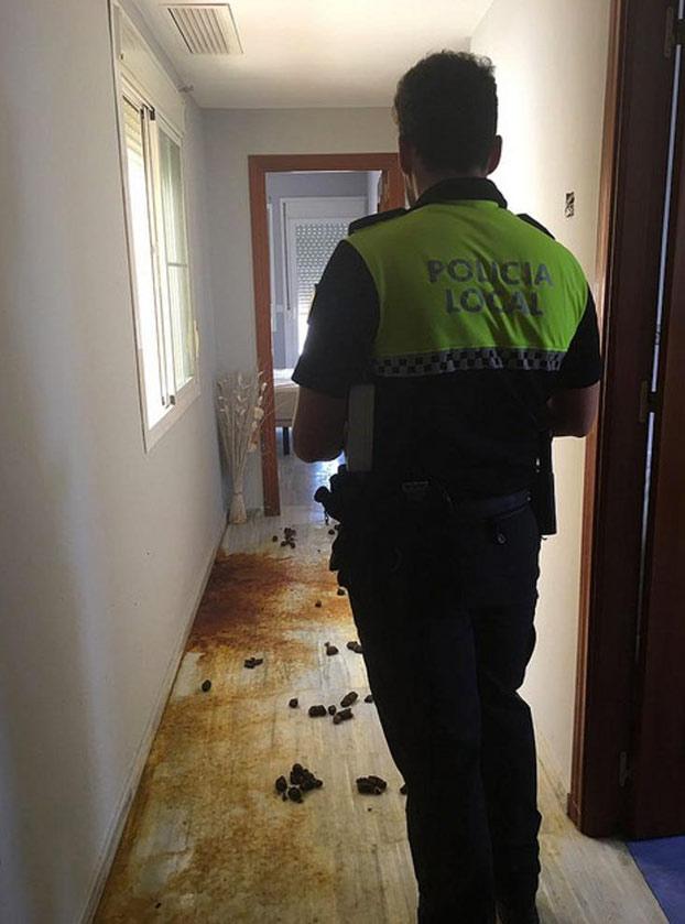 Un bóxer sobrevive 4 meses bebiendo agua del retrete encerrado en un piso de Sevilla