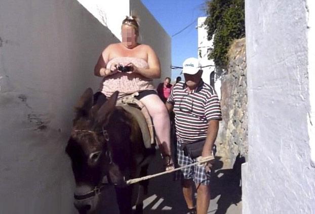 Los lugareños de Santorini están utilizando mulas en lugar de burros ya que el número de turistas con sobrepeso se ha triplicado