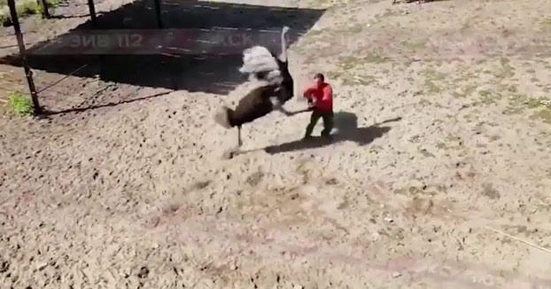 Un enorme avestruz patea a uno de los cuidadores del zoo