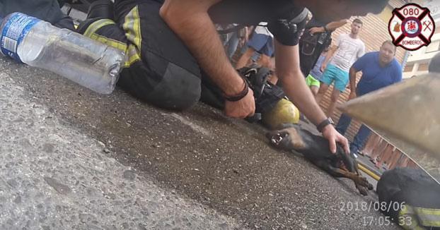 Los bomberos de Córdoba salvan la vida de un perro inconsciente durante un incendio en una casa