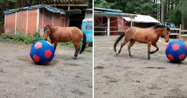 Felicidad absoluta con su nueva enorme pelota de fútbol