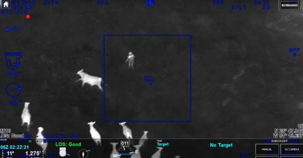 Se da a la fuga y es detenido gracias a la ayuda de un rebaño de vacas