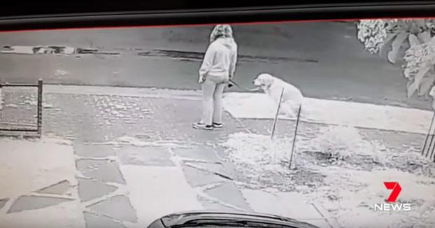 Esa mujer no recoge la caca de su perro, un vecino la pilla y hace lo siguiente...