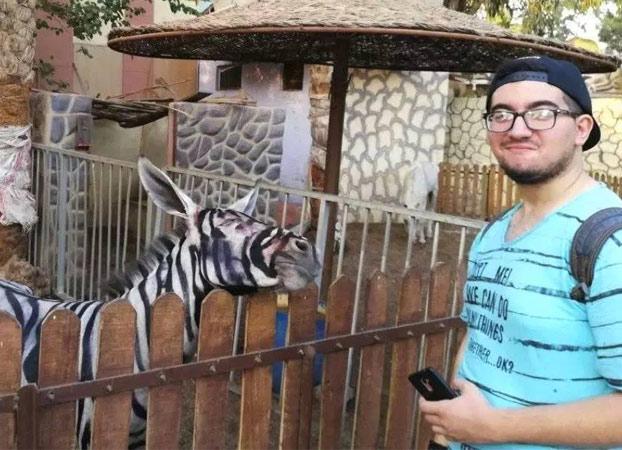 Un zoo pinta rayas a un burro para hacerlo pasar por una cebra